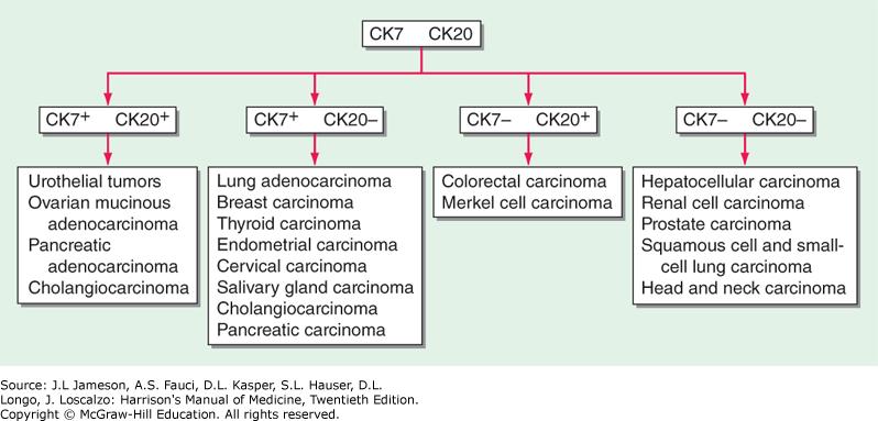 peritoneal cancer of unknown origin)